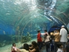 under-water-in-singapore-best-vacation